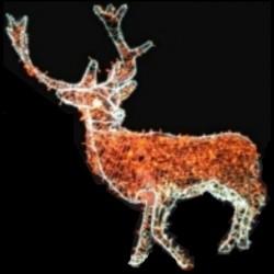 Décoration et illumination de Noël : cerf lumineux en 3D - en situation - Leader Equipements